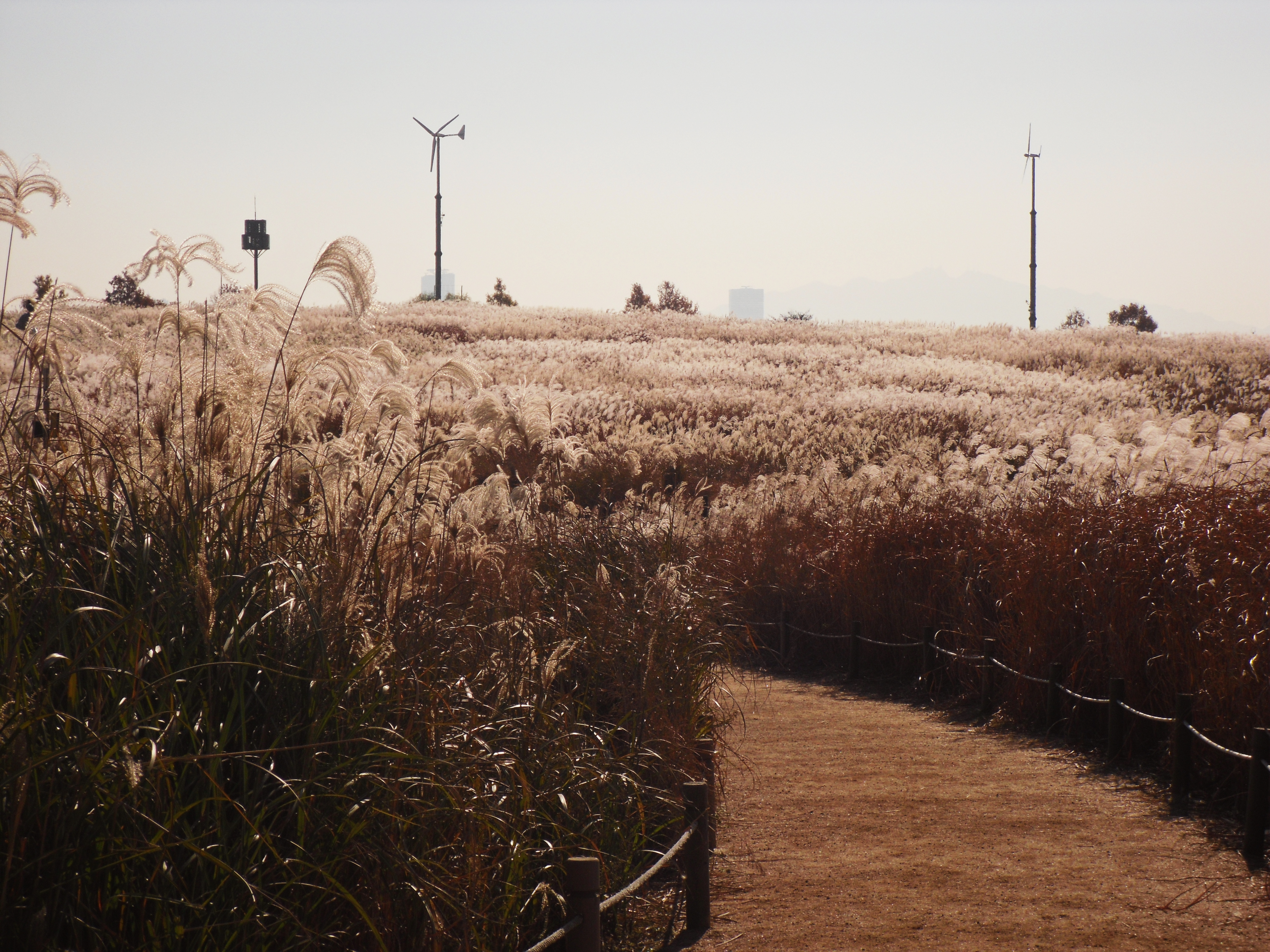 Haneul-Park