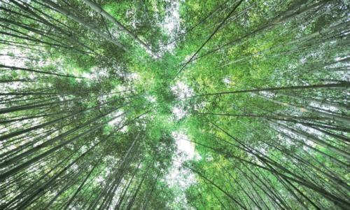 Damyang-Bamboo-Festival-담양대나무축제-500x300