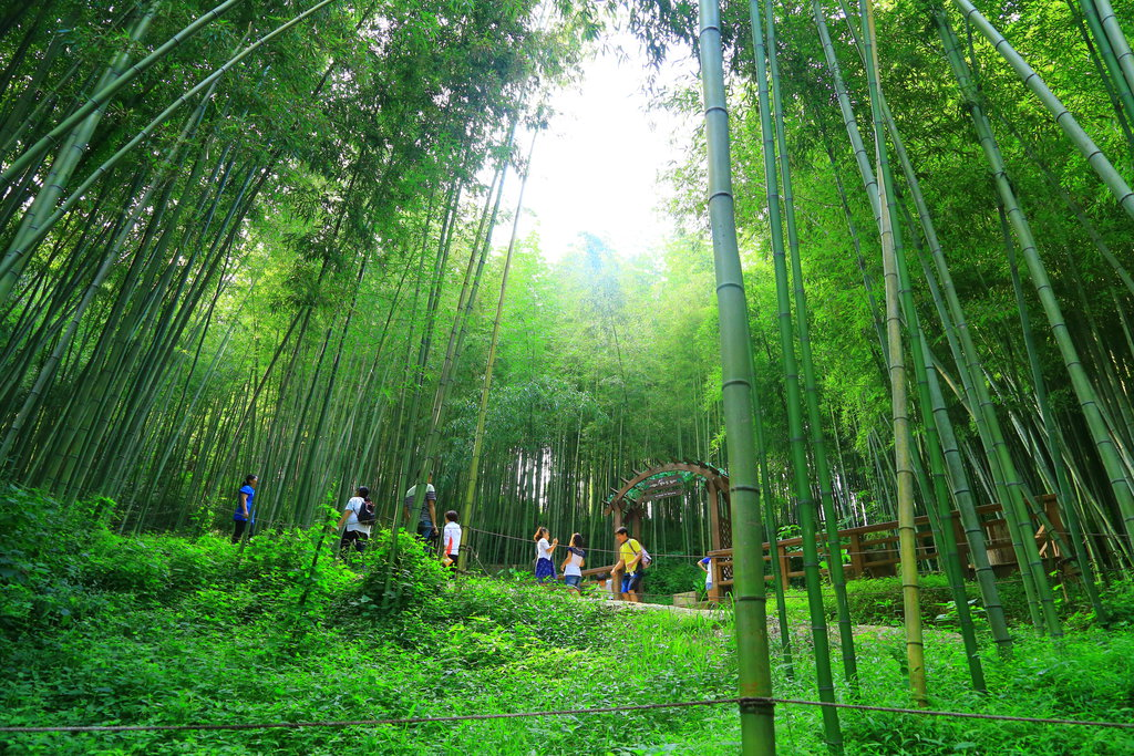 damyang__bamboo_forest___south_korea_by_ubaypermana-d7wgv3w