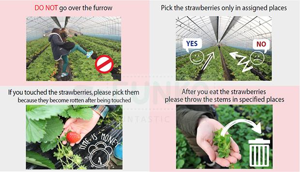 general_tip_strawberry_farm01