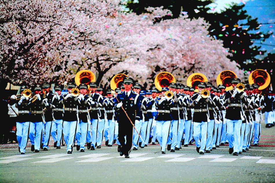 Cherry_Blossom_Jinhae_05