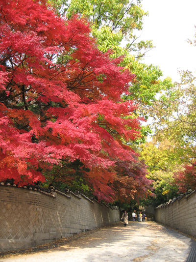 Changdeok_Palace_Foliage_1