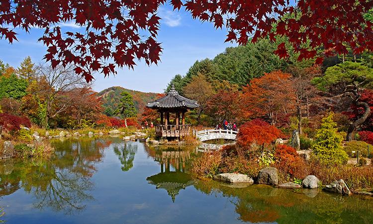 Garden_Morning_Calm_Autumn