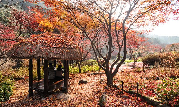 Garden_Morning_Calm_Autumn_2