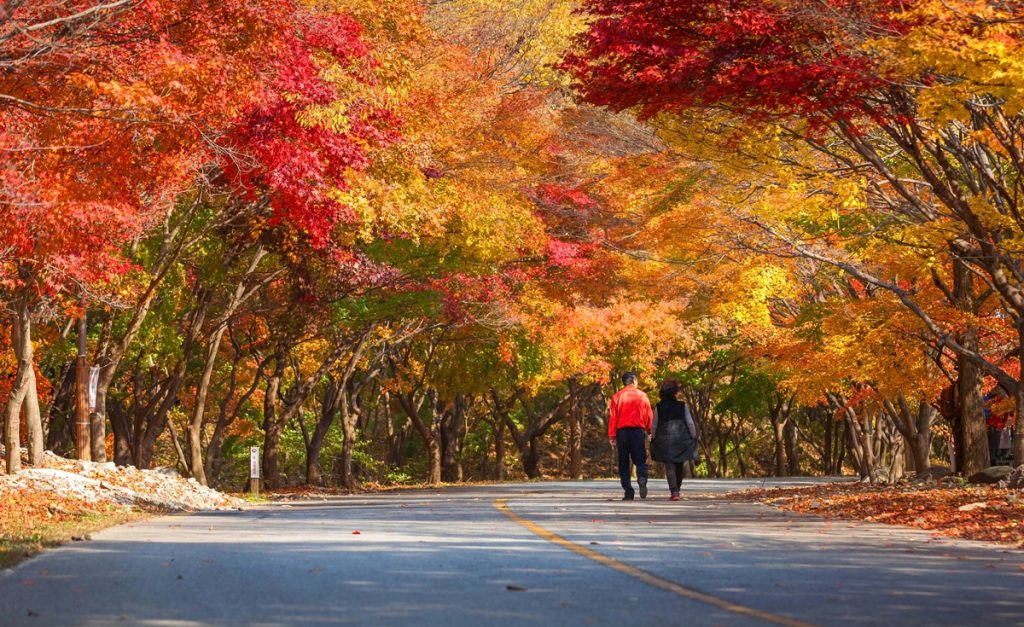 Naejangsan Mountain Autumn Foliage 3