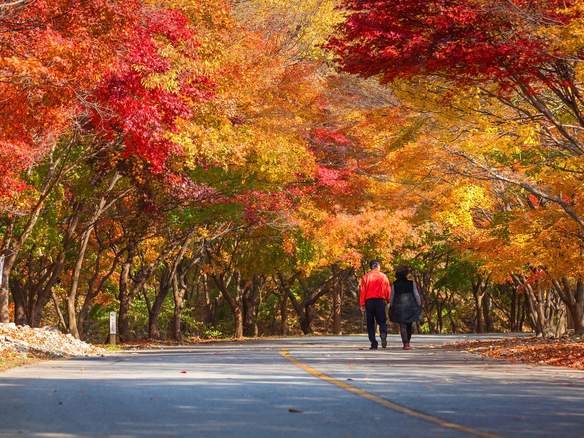 Naejangsan_National_Park3