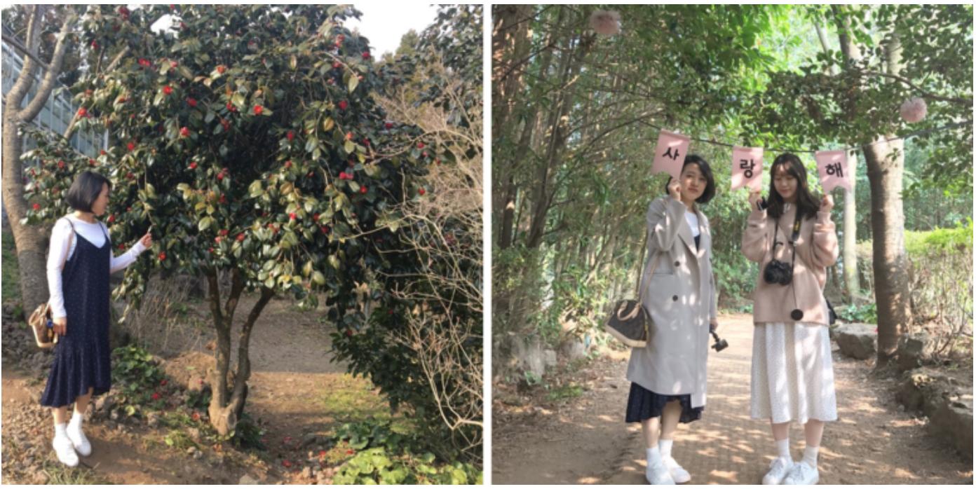 Jeju Camellia Hill