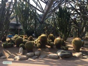 Botanical Garden Cactus