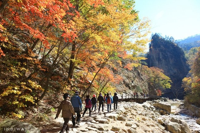 Locals enjoying autumn foliage with leaves colored in red, yellow, and orange in Seoraksan on the way to Sinheungsa Temple