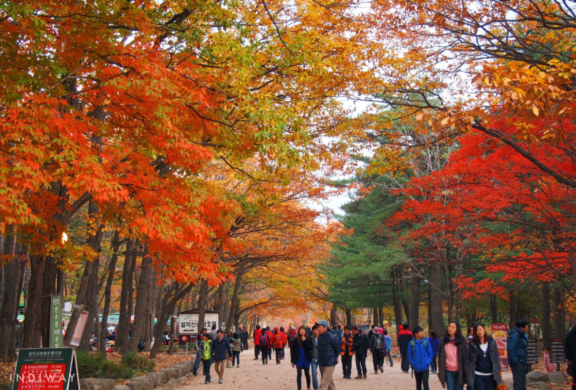 Seoraksan is known to offer the most spectacular and colorful autumn foliage view