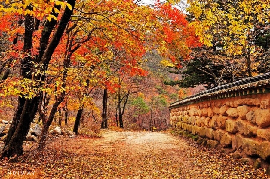 Nature pathway to Sinheungsa Temple filled in full Autumnal tones (Seoraksan Mountain)
