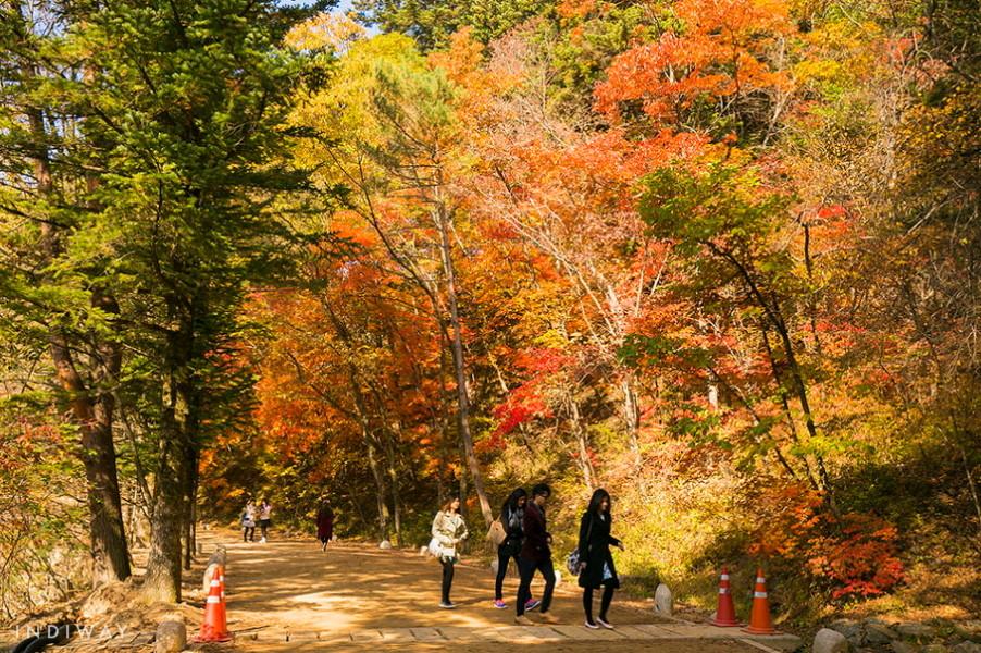 Relaxing & Romantic walk on theFir Trees Road on the way to Wonjeongsa Temple enjoying autumn foliage in Odaesan Mountain