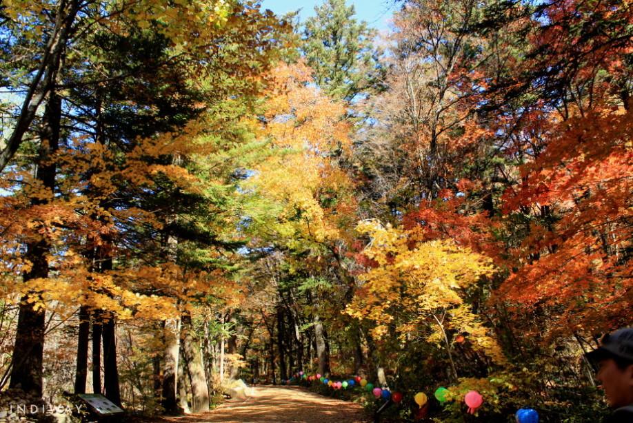 Beautiful autumn foliage on the way to Woljeongsa Temple in Odaesan Mountain
