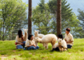 Visiting Alpaca World in Korea: One Day Tour & Tips